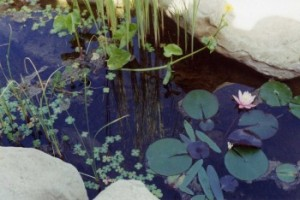 Water Features - Keeping Water Clear