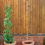Staking and Supporting Plants
