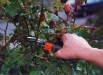 Pruning – Flower Garden Care