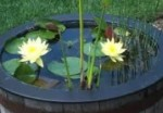 Container Water Gardening and Water Features