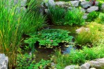 Water Garden Features to Encourage Wildlife