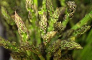 asparagus perennial vegetables