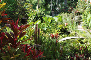 bog gardens for the gardening enthusiast