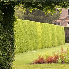 Garden Lawn Ideas - Lawn and Hedge Care