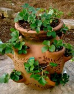 Propagating Fruit Trees and Bushes