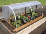 Gardening Under Cover – Greenhouses, Cloches, Conservatories