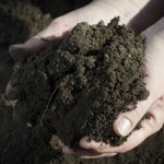 Know Your Soil Type and Organically Improve It
