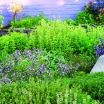 Growing Annual Herbs and Salads