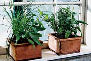 A particular Introduction towards Herb Garden House plants