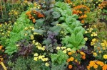 Selective Companion Planting for a Healthy Garden