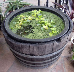 Water Container Gardening - Calendar of Care