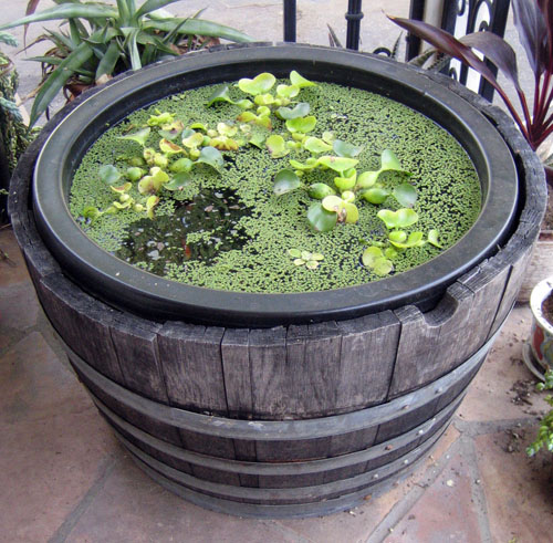Water container gardening calender of care for Small garden pond care