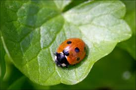 Garden Insects and Pests - Useful or Damaging?