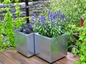 container gardening - growing plants in containers
