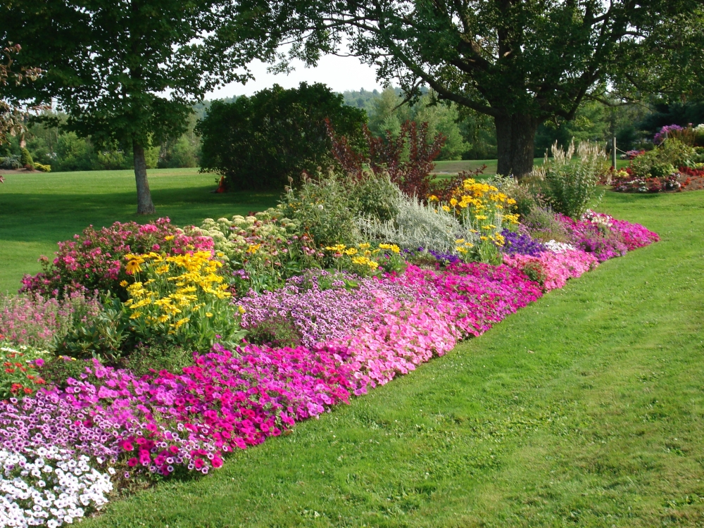The flower border for Plant garden design
