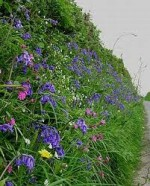 Hedgerows for Wildlife