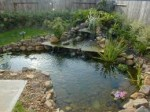 Water Feature Planting Ideas – Informal Planting