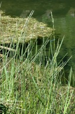 Maintaining Wildlife Pools