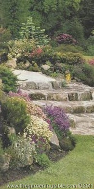 edging-or-rock-garden-plants