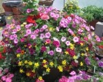 Garden Planters and Containers