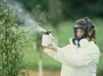 Chemical Sprays to Protect Fruit Trees