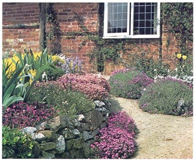 ground cover plants