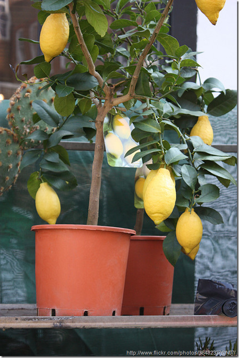 Choice of Fruits for Growing in Your Greenhouse