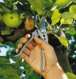 Pruning Fruit Trees and Fruit Bushes