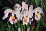 Orchids for Beginners and Tips for Starting an Orchid Collection