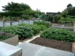 The Vegetable and Fruit Gardens