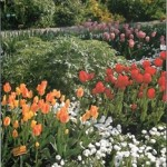 Spring Borders: Flowers Throughout the Spring