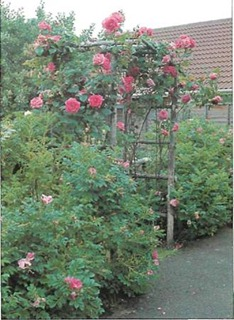 You can use a rose arch to separate a paved area from the lawn, creating 'rooms' in the garden.