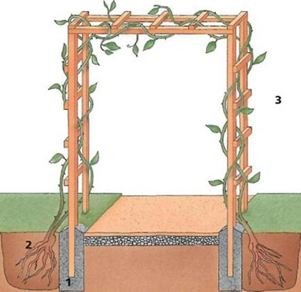starting a rose arch