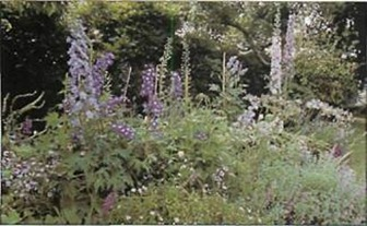 Tall delphiniums are ideal for giving height to a blue border and combine well with pansies, agapanthus and catmint.