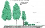 Plant Association: Trees, Herbaceous, Bulbs, Ground Cover Plants
