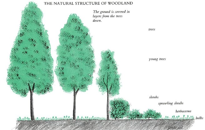 natural structure of woodland
