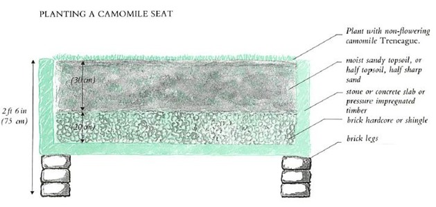 planting a camomile seat