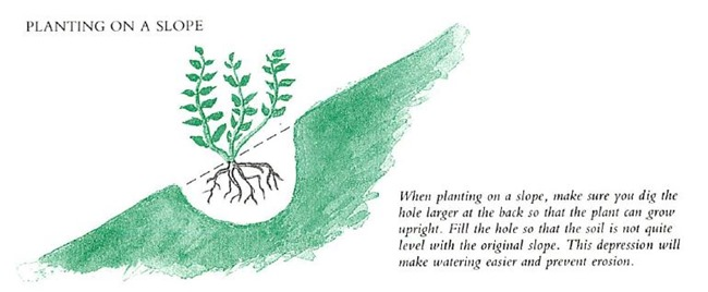 planting on a slope
